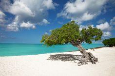 Aruba white beaches