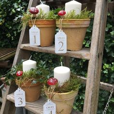 Christmas Garden, Winter Garden, Christmas Crafts, Christmas Stuff, Christmas Ideas, Christmas Makes, Xmas, Indoor Christmas Decorations, Shabby