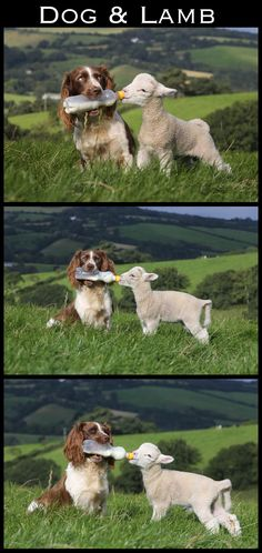 to make sure that no one went hungry...   The 30 Most Inspiring Interspecies Friendships Of TheYear