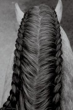Double mane braid from above! I know it's a horse, but it's still hair stuff :)