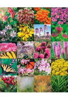 Shop our excellent selection of native plants, seed mixes, shrubs, ferns and more for ecologically beneficial landscapes and gardens. Bringing landscapes to life since Wildlife Gardening, Plants, Garden Care, Flowers, Bloom, Flowers Perennials, Flower Garden, Native Plants, Deer Resistant Flowers