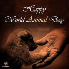 """Let's celebrate """"World Animal Day"""". Get involved and show you care. ❤️      ❤️ #WorldAnimalDay #dogs #pets #petlovers #petowners  https://twitter.com/FidoActive"""