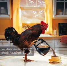 The perfect Rooster Morning WakeUp Animated GIF for your conversation. Discover and Share the best GIFs on Tenor. Gif Café, Animated Gif, I Love Coffee, Coffee Break, Tag Youtube, Foto Gif, Galo, Good Morning Good Night, Coffee Lovers