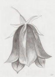 images - Desene in creion cu flori