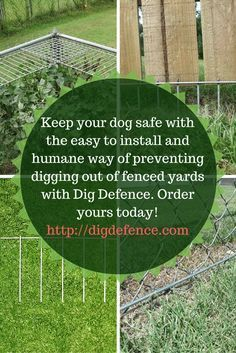 unchain your dog | extend height of fence, make fence taller