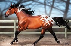 Appaloosa, wow look at that mane
