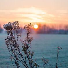 Goeiemorgen stadsbos. Sunrise op een deftig uur 8u30 #deinze #sunrise