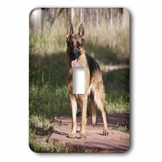 3dRose German Shepherd dog in a yard - US32 ZMU0085 - Zandria Muench Beraldo, Double Toggle Switch