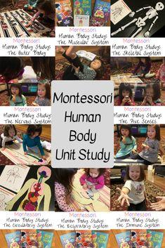 Montessori Human Body Unit Study – MOMtessori Life Human Body Crafts, Human Body Science, Human Body Activities, Human Body Unit, Human Body Systems, Science Montessori, Preschool Science, Science Activities, Montessori Homeschool