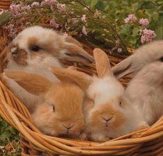 Baby Bunnies, Cute Bunny, Bunny Rabbits, Cute Little Animals, Baby Animals, Beautiful Creatures, Animal Photography, Fur Babies, Puppies