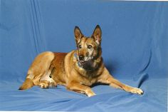 china...she wasn't my dog...but she was one of the coolest retired K-9 dogs I ever had the pleasure to know