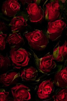 ❤ wanna lay you down in a bed of roses....