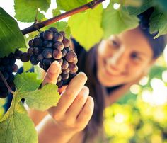 Herdade do Vau. RISO WINE #Vineyard. #Alentejo. Portugal.