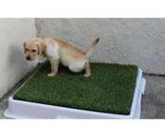 Puppy Toilet Training Spray South Delhi - Pet Classifieds