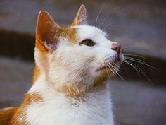 I Want That... #VSCOcam #vsco #focus #life #cat #gato #animals #pets #cute #eyes #olhos #animal #pb #cores #colors #beauty #naturalbeauty #natural #portrait #face #pet #yellow #foto #photograph #photography #fotografia #photo #pic #art #arte Natural Beauty from BEAUT.E