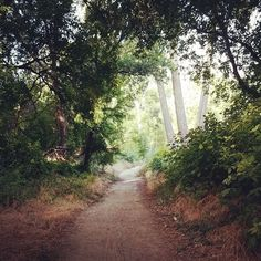 some Zayante #trail time this morning #goodmorning #felton #henrycowell