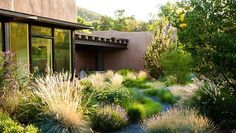 Carolyn Mullet/CarexTours (@ccamullet) • Instagram photos and videos Garden Steps, Ornamental Grasses, Natural Materials, New Mexico, Building Design, Landscape Design, Paths, Entrance, Scene