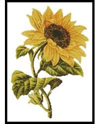 This counted cross stitch pattern of a golden Sunflower was created from an antique print courtesy of Vintagerio. Only full cross stitches are used in this pattern. It is a black and white symbol pattern.