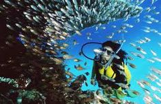 snorkeling coral reef - Google Search