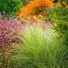 Contrast textures - Fine-leafed ornamental grasses like Miscanthus sinensis 'Morning Light' look especially striking against shrubs like Japanese barberry (Berberis thunbergii atropurpurea 'Rose Glow').