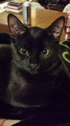 Guest Star: Sebastian The Broken Tailed Cat and his Forever Home story find this amazing photo from Katzenworld