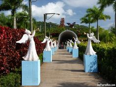 1000 images about mi ciudad caguas puerto rico on for Bodas jardin botanico caguas