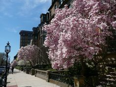 Commonwealth Ave. in the Spring #massachusetts #travel  Photo Credit: Tim Grafft
