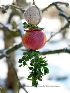 Fixa fågelmat / Land nr 51 English Christmas, Christmas Love, Outdoor Christmas, All Things Christmas, Winter Christmas, Christmas Crafts, Xmas, Holiday, Outdoor Trees