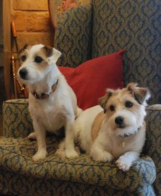 Jack Russell terriers are big among horse people!  DSC_0038 by Sarah Clegg, via Flickr
