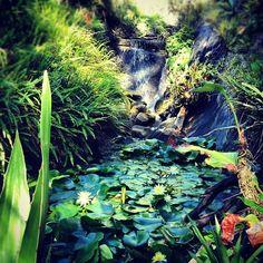 San Diego Botanic Garden Photo by @happymundane • Instagram