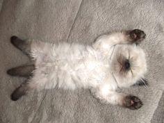 Sleeping ball of fluff