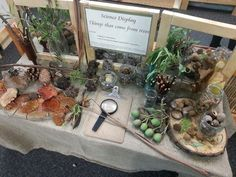 Beautiful table to explore things that come from trees - from Forever Friends ELC and Kindergarten