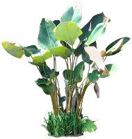 A Collection of tropical (and subtropical) plant images with transparent background. Texture Photoshop, Tree Photoshop, Photoshop Elements, Illustration Vector, Plant Illustration, Landscape Elements, Landscape Design, Tree Psd, Plant Pictures