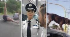 Chistes - Los Videos Virales de la Semana 8