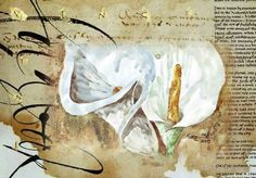 Arum Lilies in my garden (Tarlton, South Africa) – W watercolour and coffee on a textured back-ground