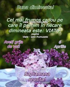 Good Morning Flowers, Advice, Iphone, Night, Birthday, Instagram, Rome, Birthdays, Tips