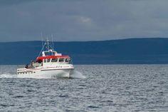 Kuningasrapusafari, Kuningasrapusafarit, Jäämeren kuningasrapusafari Fishing, Boat, Vehicles, Sup Fishing, Boats, Car, Peaches, Vehicle, Pisces