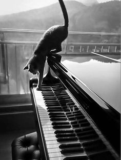 """There are two means of refuge from the miseries of life, music and cats."" --Albert Schweitzer"