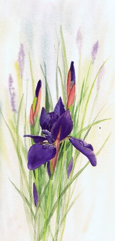First Iris by Julie Horner - watercolour