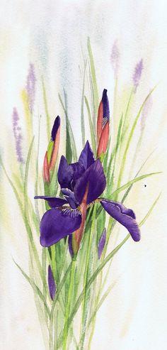 First Iris by Julie Horner - watercolour