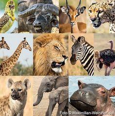 Maximilian Weinzierl – Fotografie – Blog: zurück vom Serengeti - Fotocampus 2016