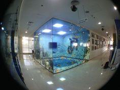 Aquarium meeting room Floor Graphics, Window Graphics, Branding, Open Office, Environmental Graphics, Studio, Architecture, Decoration, Outdoor Spaces