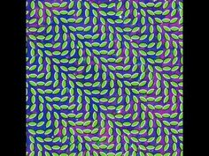 Hey! Happy National Coming Out day with Animal Collective... #FLORIDA