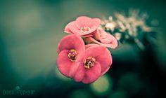 Flowers in The Garden   Dimar Siregar Photography