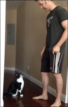 Affectionate Cat Reaches Up For A Big Hug From His Human aww