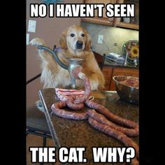 Tough Neighborhood - LOLcats is the best place to find and submit funny cat memes and other silly cat materials to share with the world. We find the funny cats that make you LOL so that you don't have to. Funny Dog Memes, Funny Animal Memes, Funny Animal Pictures, Funny Photos, Funny Dogs, Funny Animals, Cute Animals, Dog Humor, Cat Memes