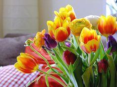 Ranukeln und Tulpen