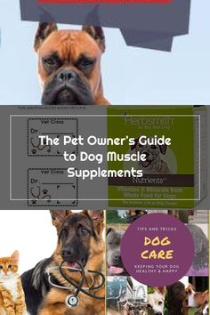 If your pet isn't suffering from a specific health condition that could be improved upon with muscle supplements, or a veterinarian doesn't prescribe or even suggest muscle supplements, then supplementing a dog's diet with muscle-building vitamins or powders is generally up to the owner's discretion. #dogmuscle #dogs #petsupplements #dogsupplements #bully #bullies #pitbulls