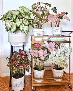 House Plants Decor, Plant Decor, Indoor Garden, Garden Plants, Decoration Plante, Low Light Plants, Plants Are Friends, Botanical Flowers, Outdoor Plants