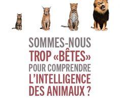 http://www.vegactu.com/actualite/livres-actualite/betes-intelligence-des-animaux-waal-24095/?utm_source=dlvr.it&utm_medium=twitter